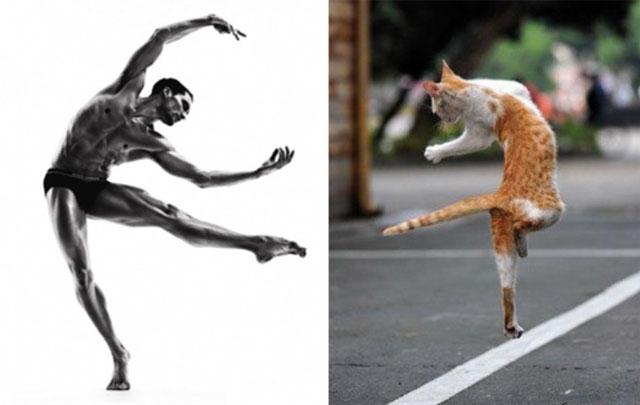 cat-modeling12