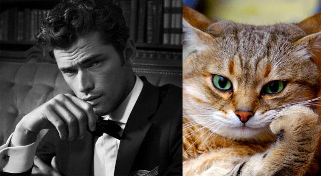 cat-modeling16