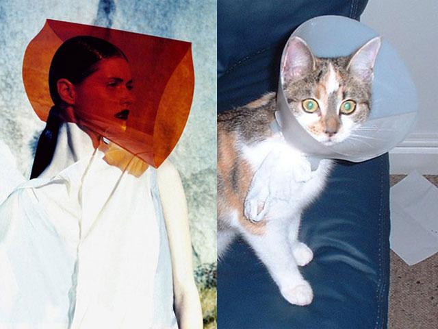 cat-modeling3