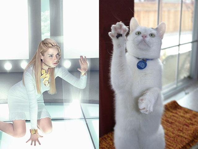 cat-modeling8