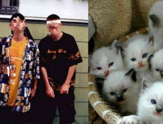 White Gangsters Killing Kittens As Gang Initiation