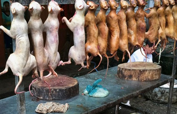 american-restaurant-dog-meat