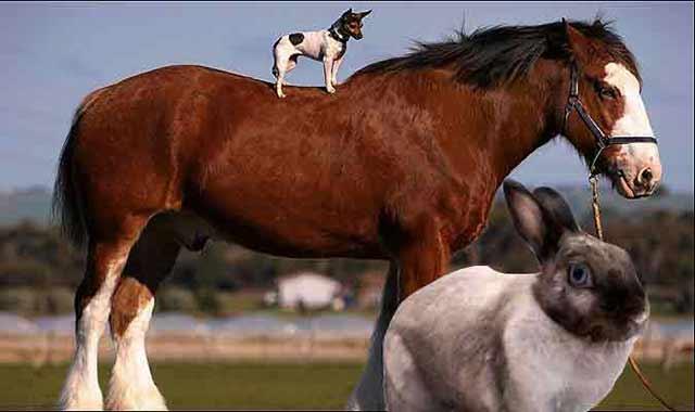 rabbit-in-horse-dog