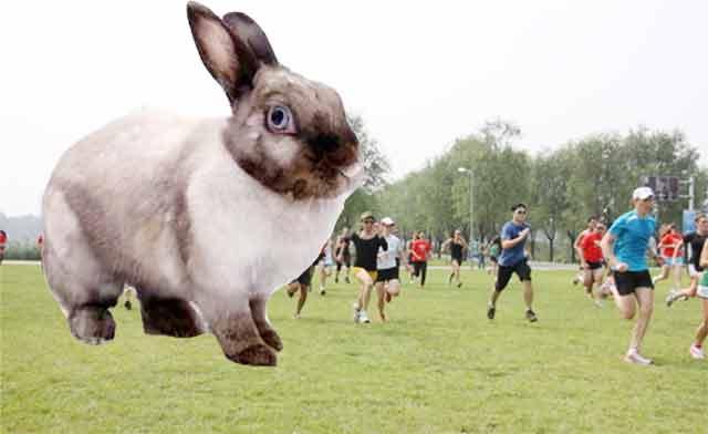rabbit-joggers-dog