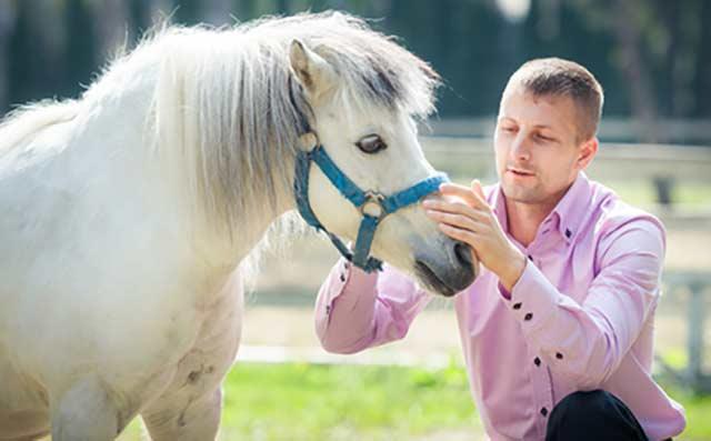 close-pony-640