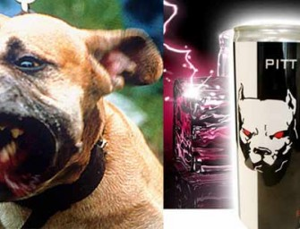 Pit Bull Addicted to Pit Bull Energy Drink