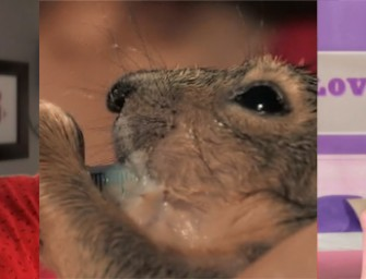 Squirrel Mommy: The Craziest Video You Will Ever See